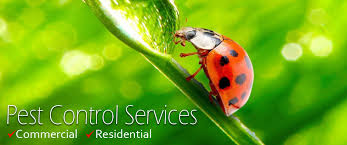 Comprehensive Pest Treatment